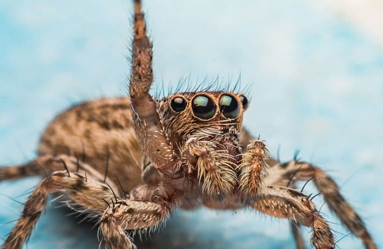 A spider with one leg raised in the air as if asking a question.