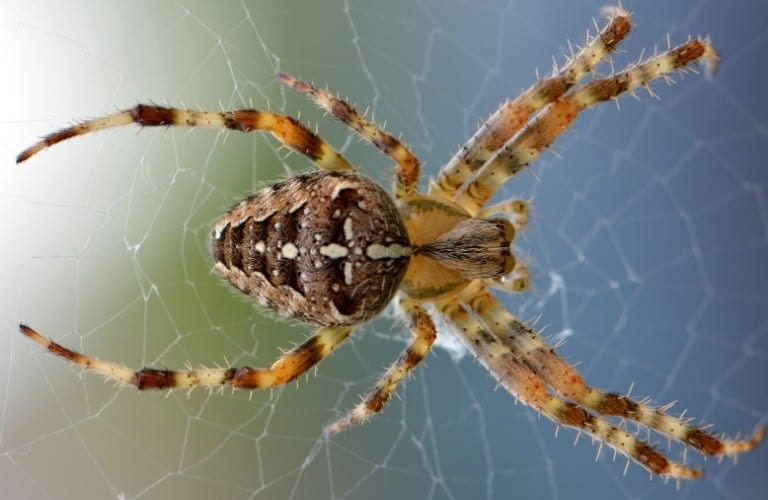 A brown and yellow spider on a web with muted sunlight in the background.