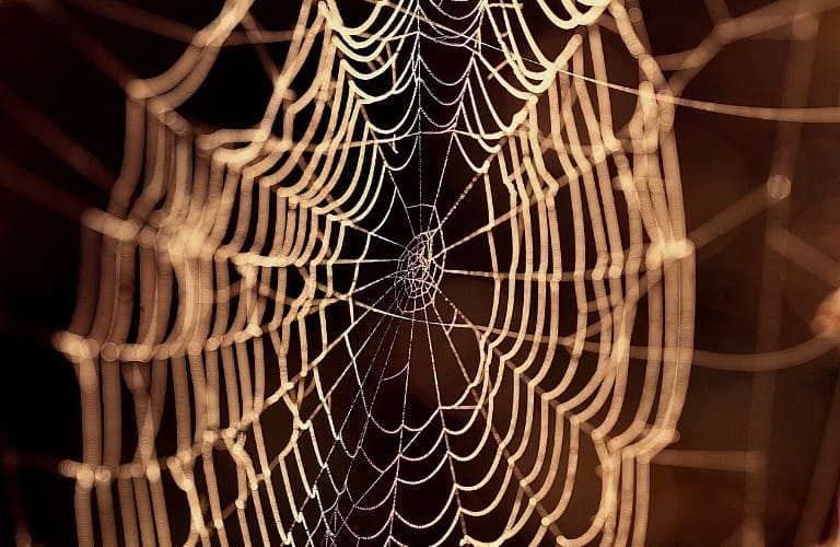A spider web that appears golden in the diffused sunlight.