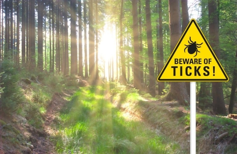 A lovely trail through the woods with a warning sign for ticks at the entrance.