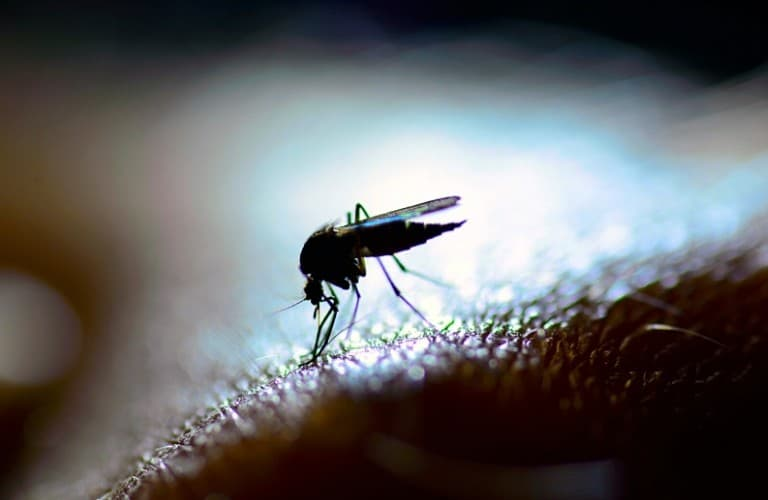 A mosquito on human skin with a bright light in the background.