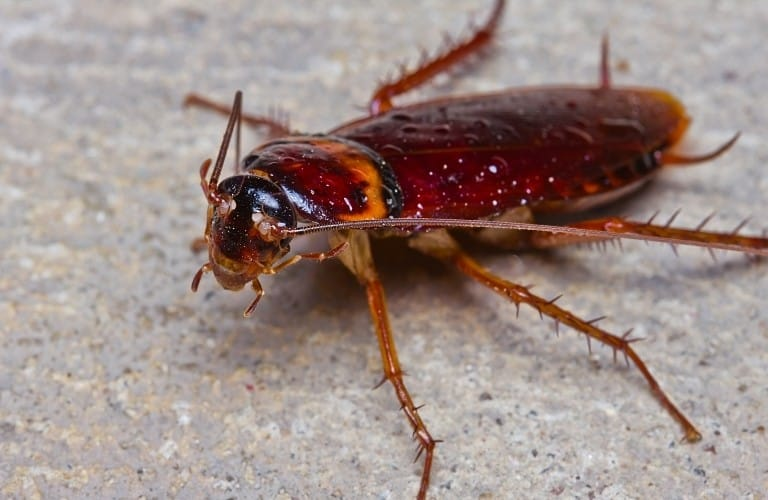 A large cockroach with spiny legs on pavement.